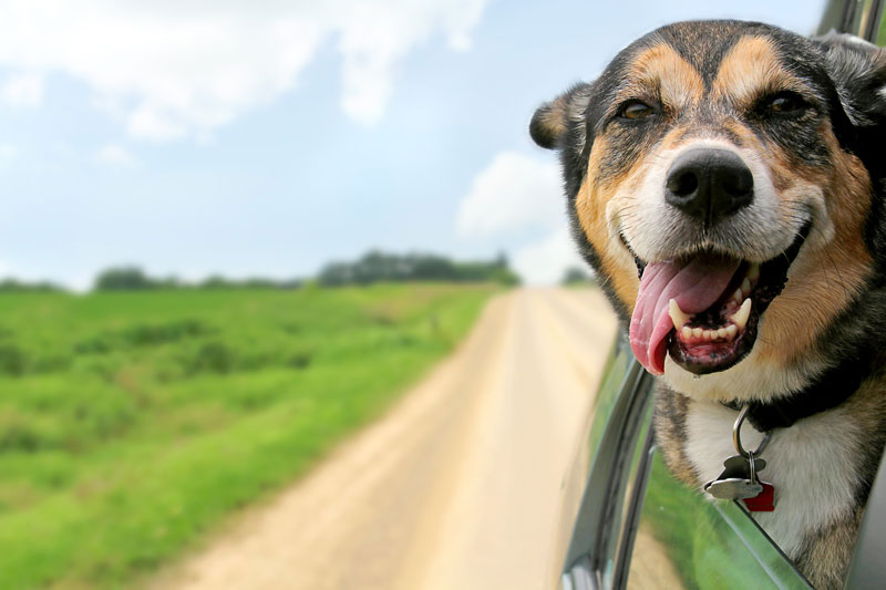 Road-Tripping with Pets